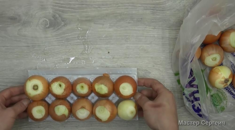 как вырастить зеленый лук на подоконнике в воде